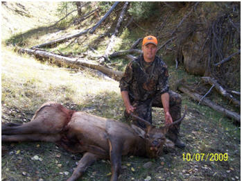 Utah Cow Elk Hunt and Utah Spike Elk Hunt, Utah Elk Hunts