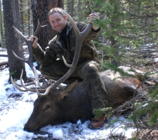 Utah General Season Open Bull Elk Hunt, Utah Elk Hunts