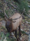 Utah Archery, Muzzleloader, Rifle Elk and Deer Hunts.